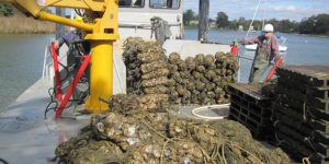 Great Baltimore Oyster Partnership