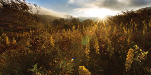 Trails and views abound at scenic Graveyard Fields.Photography by Spencer Black