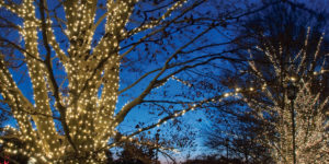 Lighting up at Longwood Gardens.Courtesy of Longwood Gardens