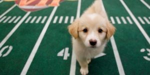 Puppy Bowl.Animal Planet.