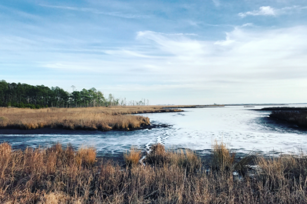 The Blackwater National Wildlife Refuge along the Chesapeake Bay on Maryland's Eastern Shore.Lydia Woolever